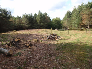 Late Neolithic or Bronze Age burial mound within a forestry plantation at Harling Heath.