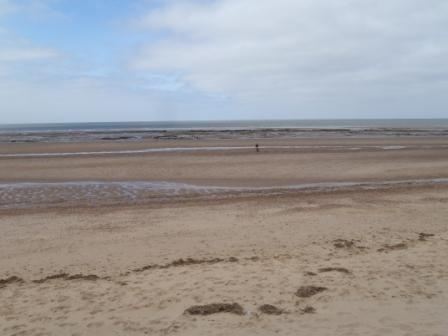 Holme beach peat beds